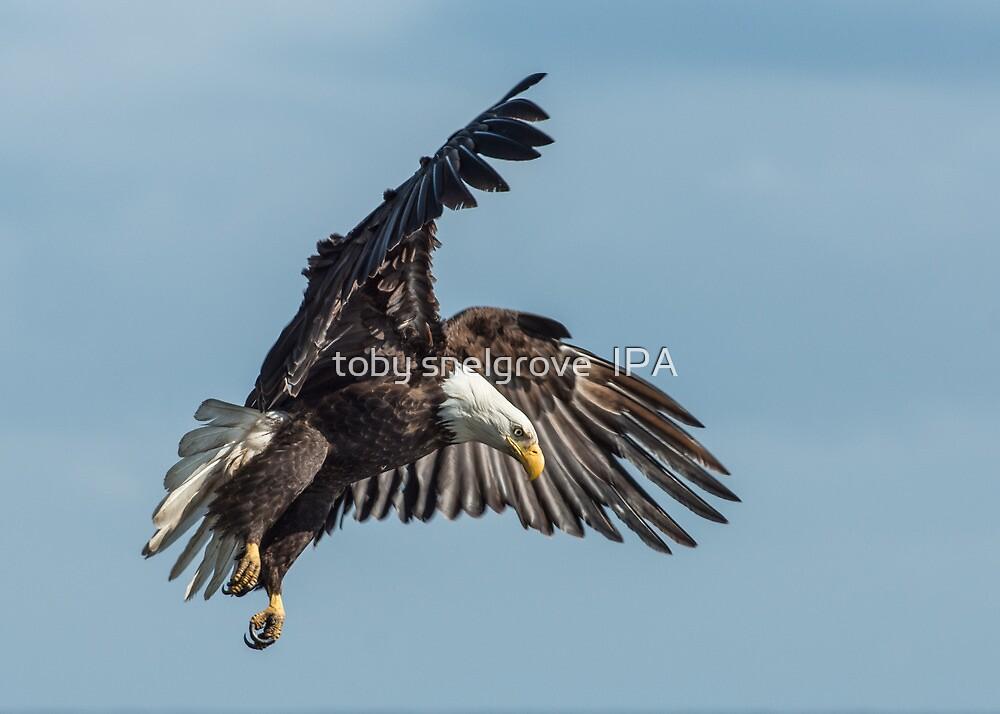 West Coast Eagle on it Prey by toby snelgrove  IPA