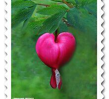 (????)Lamprocapnos spectabilis(bleeding heart) Stamp by ✿✿ Bonita ✿✿ ђєℓℓσ
