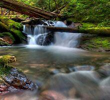 Goat Creek.....Again by TeresaB