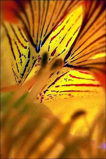 Fleur de Nasturtium by paintingsheep