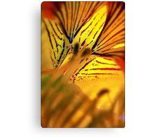 Fleur de Nasturtium Canvas Print
