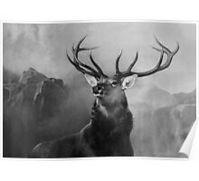 Head Deer In Black And White Poster