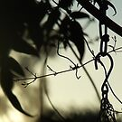 262/365 hook, chain and tendrils by LouJay