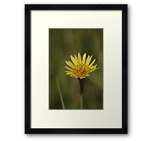 Yellow Wild Flower which I don't know the name of Framed Print