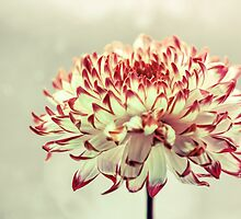 Hold onto the Light by micklyn