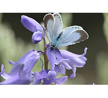 Blue bells with a Blue butterfly Photographic Print