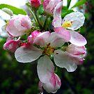 pink raindrops by LoreLeft27