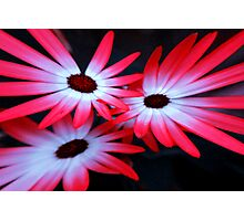 Neon flowers on Black background Photographic Print