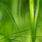 Green green grass by ruthjulia
