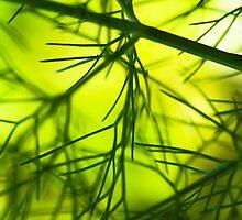Lush foliage in the sunshine by ruthjulia