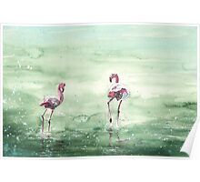 Flamingos in The Camargue 02 Poster