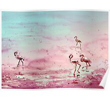 Flamingos in The Camargue 03 Poster