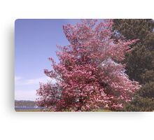 Pink Petals Along Puget Sound - Commencement Bay Metal Print