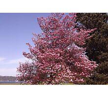 Pink Petals Along Puget Sound - Commencement Bay Photographic Print