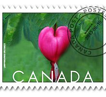 (✿◠‿◠) BLEEDING HEART CANADIAN POSTMARK STAMP (✿◠‿◠) by ╰⊰✿ℒᵒᶹᵉ Bonita✿⊱╮ Lalonde✿⊱╮