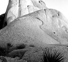 Desert Rocks, Joshua Tree Monument, CA by Thomas Barber