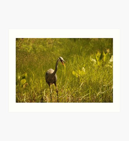 Urban 'Great Blue Heron' say's Hello! Art Print