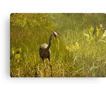 Urban 'Great Blue Heron' say's Hello! Metal Print