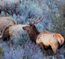 Spring Elk by BettyEDuncan
