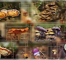 From the Forest Floor by myraj