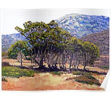 Eucalyptus Grove 2 Harbors Catalina Island Poster