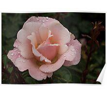 Rose and Rain 1 Poster