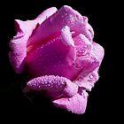 Pink Delight! by Doug Norkum
