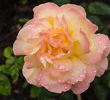 Rose and Rain 2 by Georgia Mizuleva
