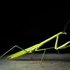 Mantis by PutroGraph