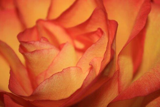 Easter Rose by absintea