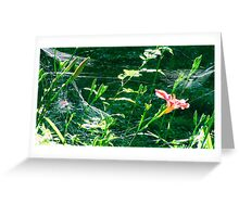 Day Lilly Among The Spider Webs Greeting Card