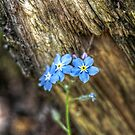Forget Me Not I by EelhsaM