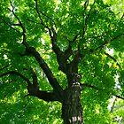 Path of a tree by Scott Ferguson