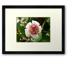 Red and Raw Framed Print