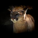 Mountain Lion Cougar Wildlife Gifts by Val  Brackenridge