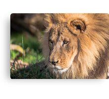 Hubert the Lion Canvas Print