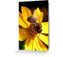 Bee on yellow flower (2) Greeting Card