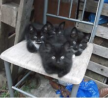 Kittens -(210613)- Digital photo/Fujifilm FinePix AX350 by paulramnora