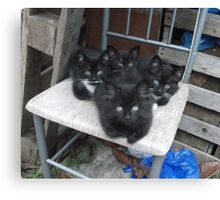 Kittens -(210613)- Digital photo/Fujifilm FinePix AX350 Canvas Print