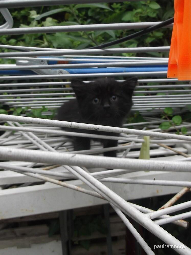 Kitten Climbing -(210613)- Digital photo/Fujifilm FinePix AX350 by paulramnora