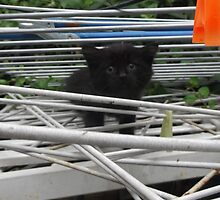 Kitten Climbing -(210613)- Digital photo/Fujifilm FinePix AX350 by paulramnora