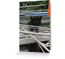 Kitten Climbing -(210613)- Digital photo/Fujifilm FinePix AX350 Greeting Card