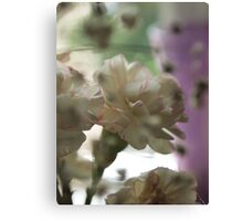 Soft Carnations Canvas Print