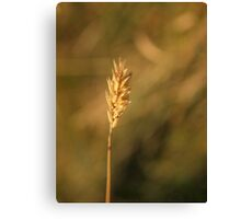 Ear of Wheat Canvas Print