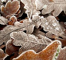 Frosty autumn leaves by Fay Freshwater