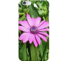 Purple Osteospermum Against Green Leaves iPhone Case/Skin