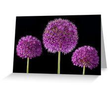 Allium Trio Greeting Card