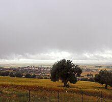 Algerian Meadows by Omar Dakhane