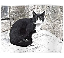 Black Cat in Sighisoara, Draculya's city Poster
