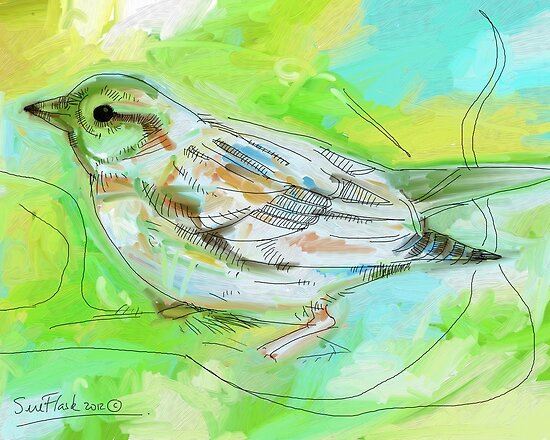 A Female Sparrow - 2012 by Sue Flask